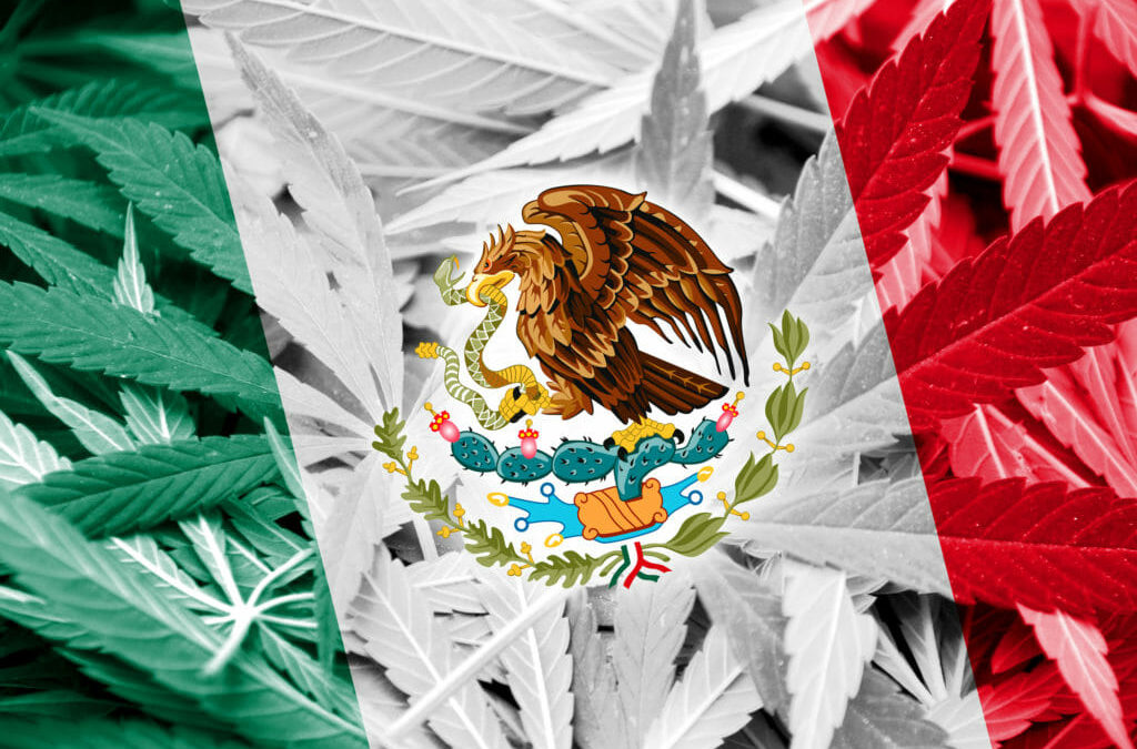Colossal Ideas: Note For Your Mexico Cannabis License NOW